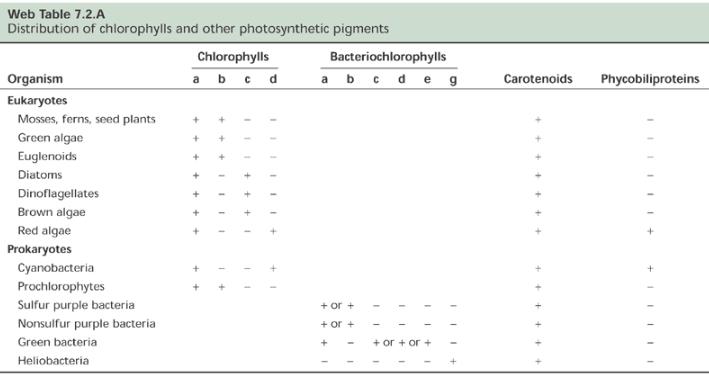 fotossintetizantes.png