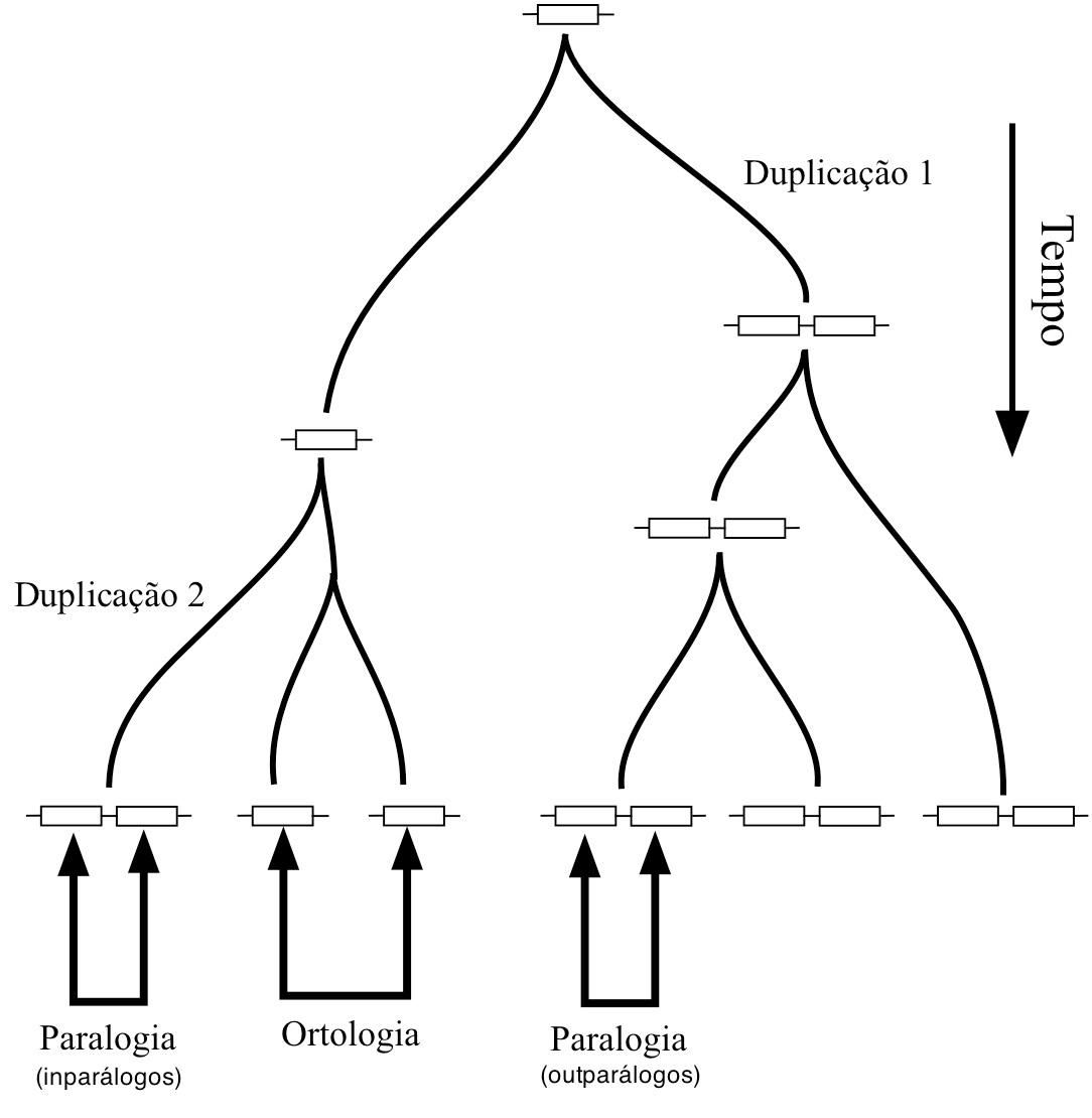 Figura-1.jpg