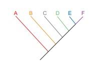 cladograma.jpg